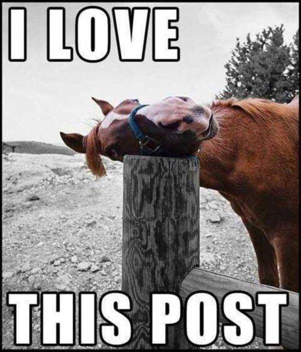 horse loves this post